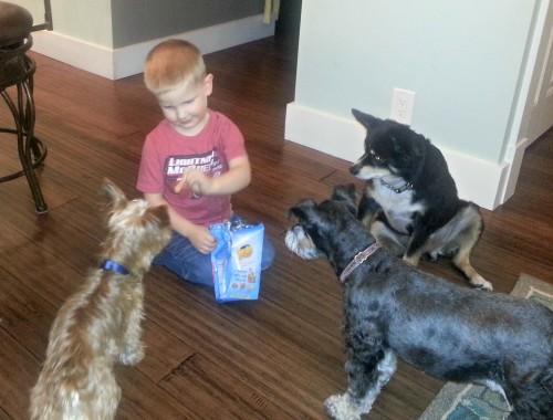 J feeding the dogs